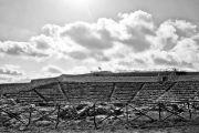 Vicoli & Sapori IV Edizione su wineinsicily.com